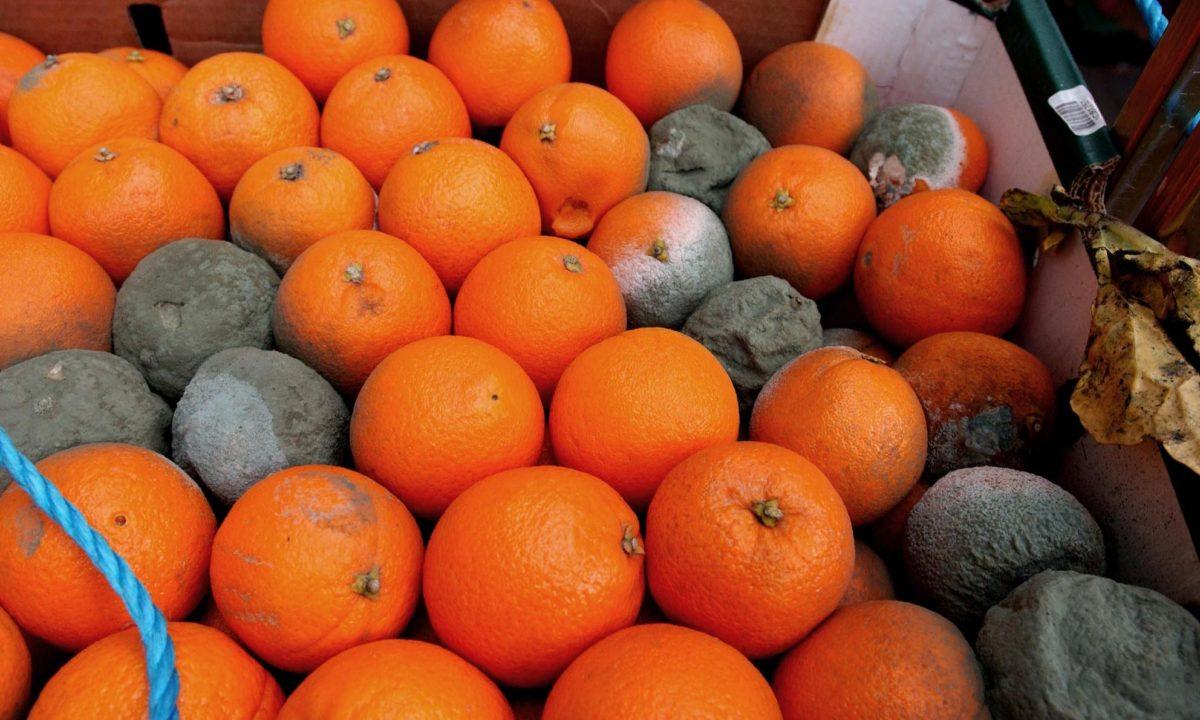 marnowanie jedzenia pomarańcze