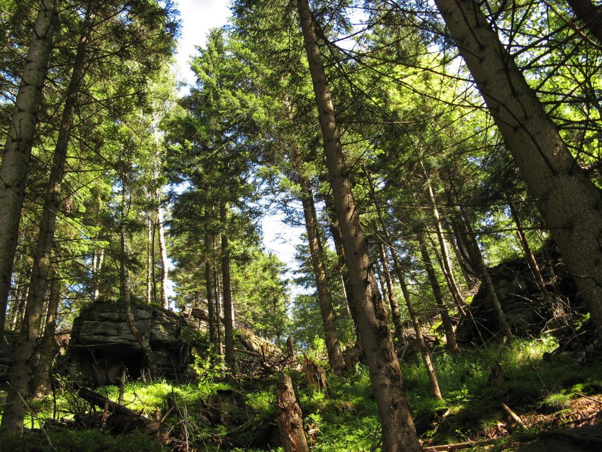 usuwanie co2 lasy
