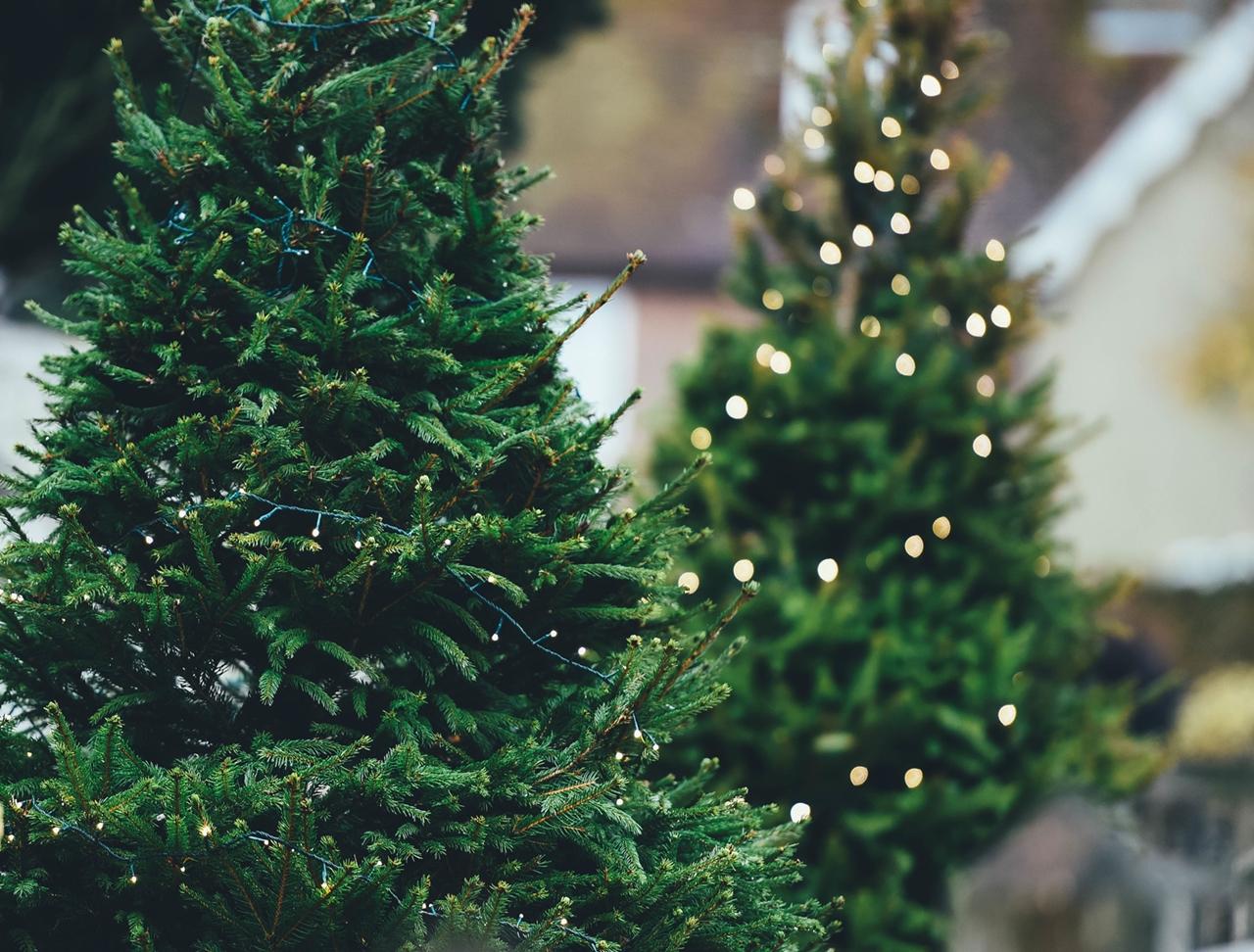 ekologiczne święta choinka żywa annie spratt