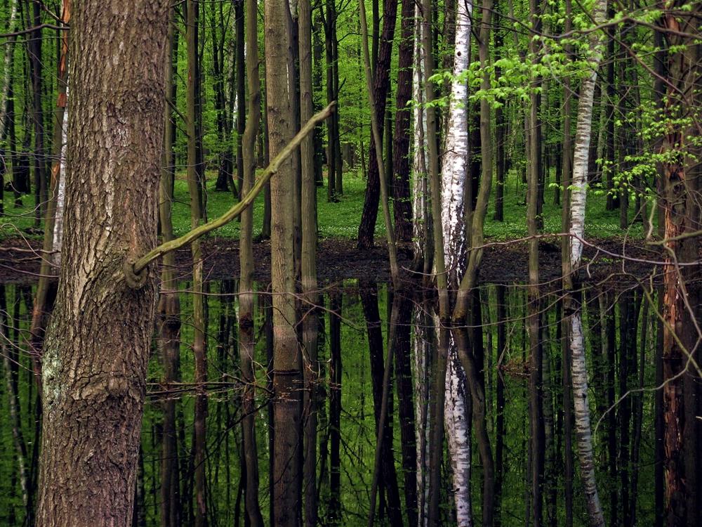 ile jest drzew na świecie las gałkówek