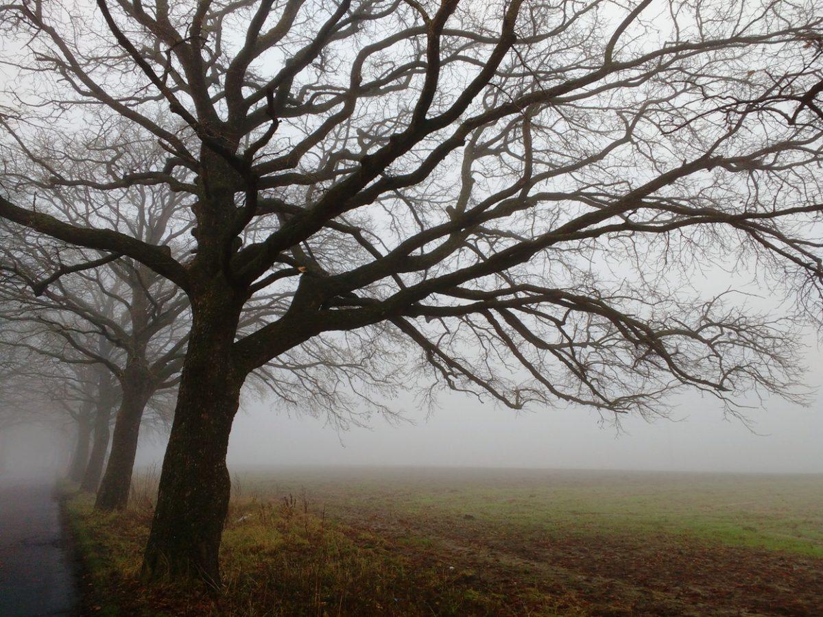 wycinka drzew aleja leszczyna czarna mielno