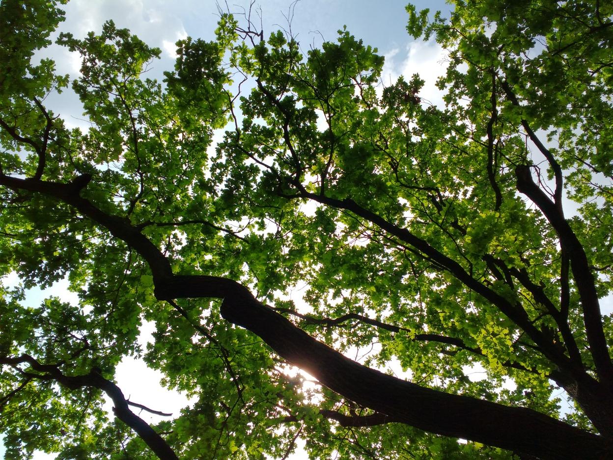 wycinka drzew drzewa w parku