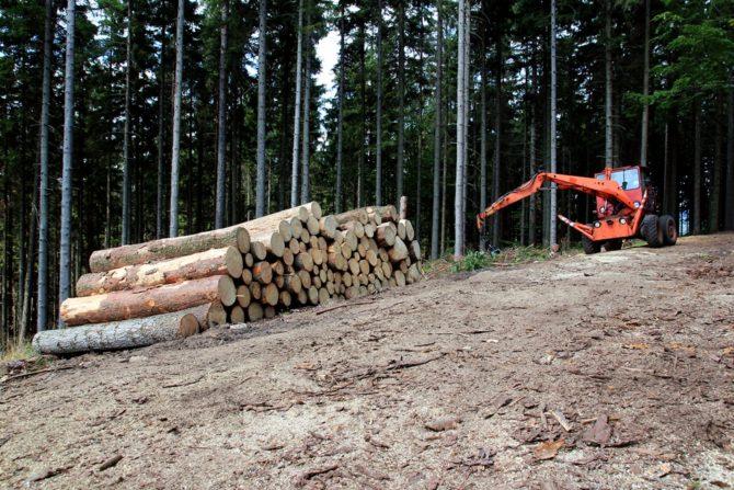 porozumienie dla przyrody wycinka drzew