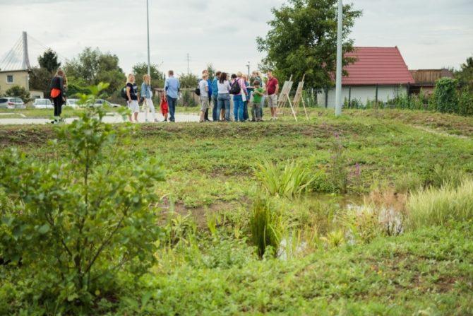 adaptacja-do-zmian-klimatu-ogrod-deszczowy