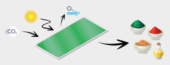 5-eko-pomyslow-biosolar-leaf-panele-z-algami